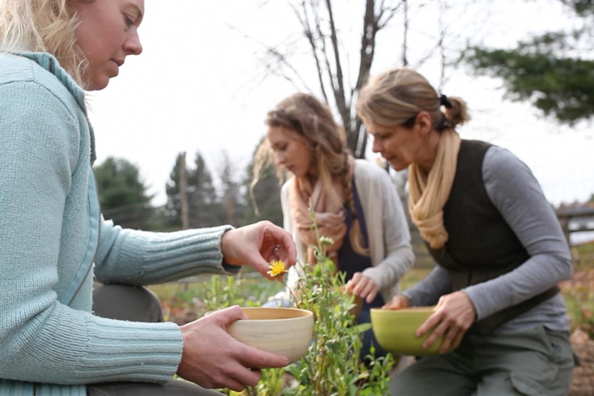 herbalists foraging wild herbs