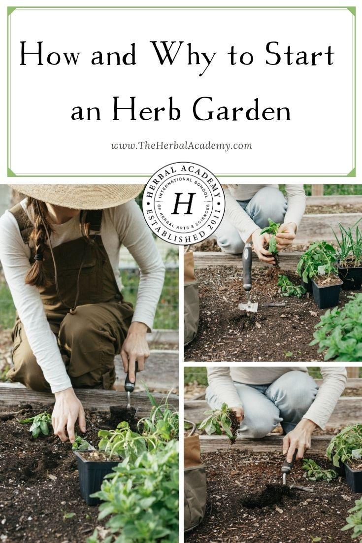 How and Why to Start an Herb Garden | Herbal Academy | If you are passionate about growing herbs, here's some helpful information on how to start an herb garden according to your individual needs!