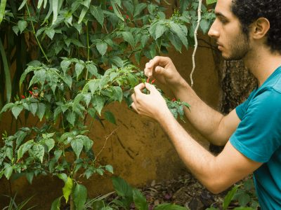 Herbal Academy Student Feature: Eduardo Yunen (@eyunen) | Herbal Academy | This tenth installment of our Student Feature Series features herbalist Eduardo Yunén, who enjoys permaculture practices and wild foraging.