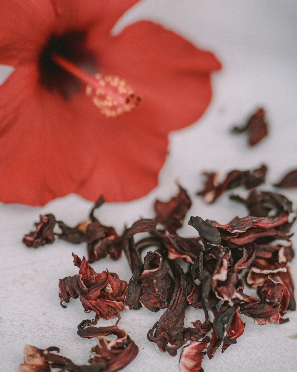 dried hibiscus flowers with hibiscus flower in the background