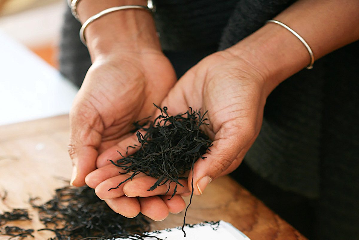 hands holding dried seaweed