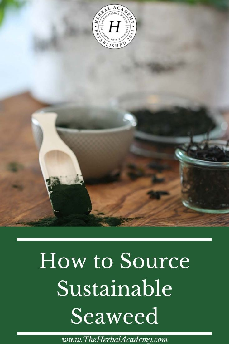 How to Source Sustainable Seaweed | Herbal Academy | Sustainable seaweed is kind to the planet and can make a delicious, nutritious addition to your soups, salads, smoothies, and baked goods!