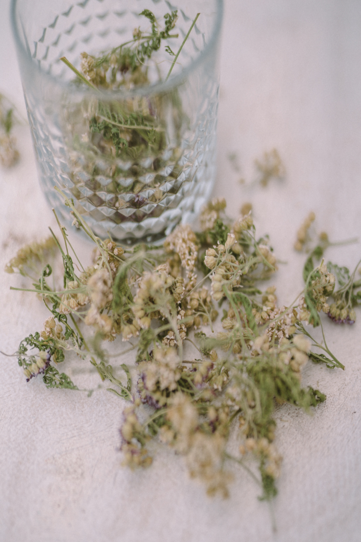 dried yarrow leaves in a glass and scattered on a table