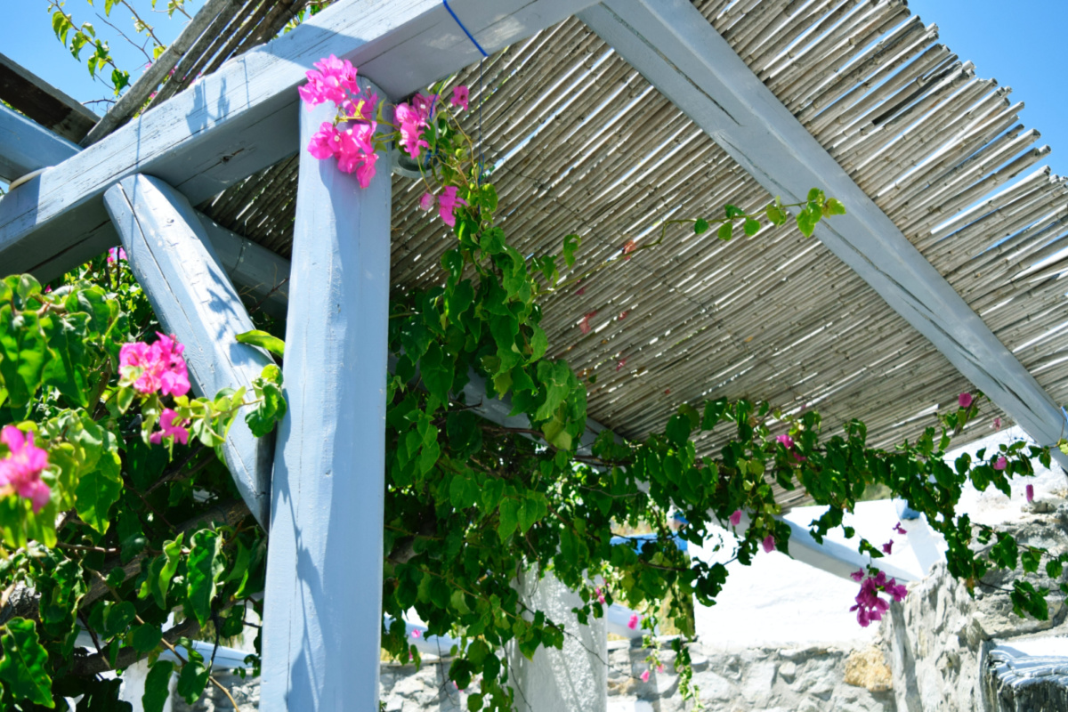 pergola with vining plants growing