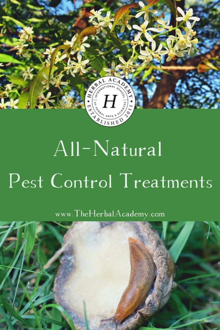 All-Natural Pest Control Treatments | Herbal Academy | Check out these all-natural pest control preparations for your garden taken from Tammy Hartung's book, Homegrown Herbs.