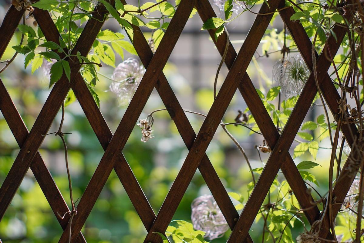 garden trellis with vines