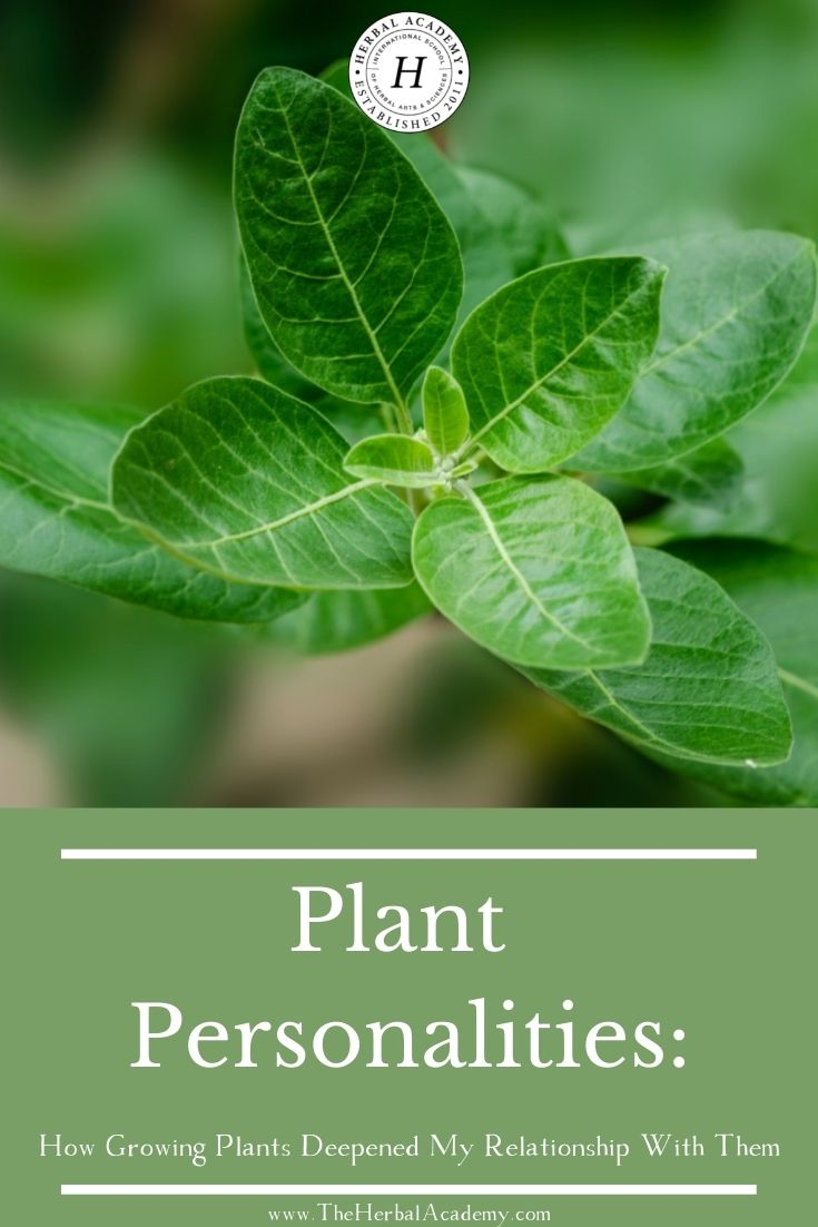 Plant Personalities: How Growing Plants Deepened My Relationship With Them | Herbal Academy | Caring for plants from seed to harvest unlocks crucial information on how to best interact with plants and learn their plant personalities.
