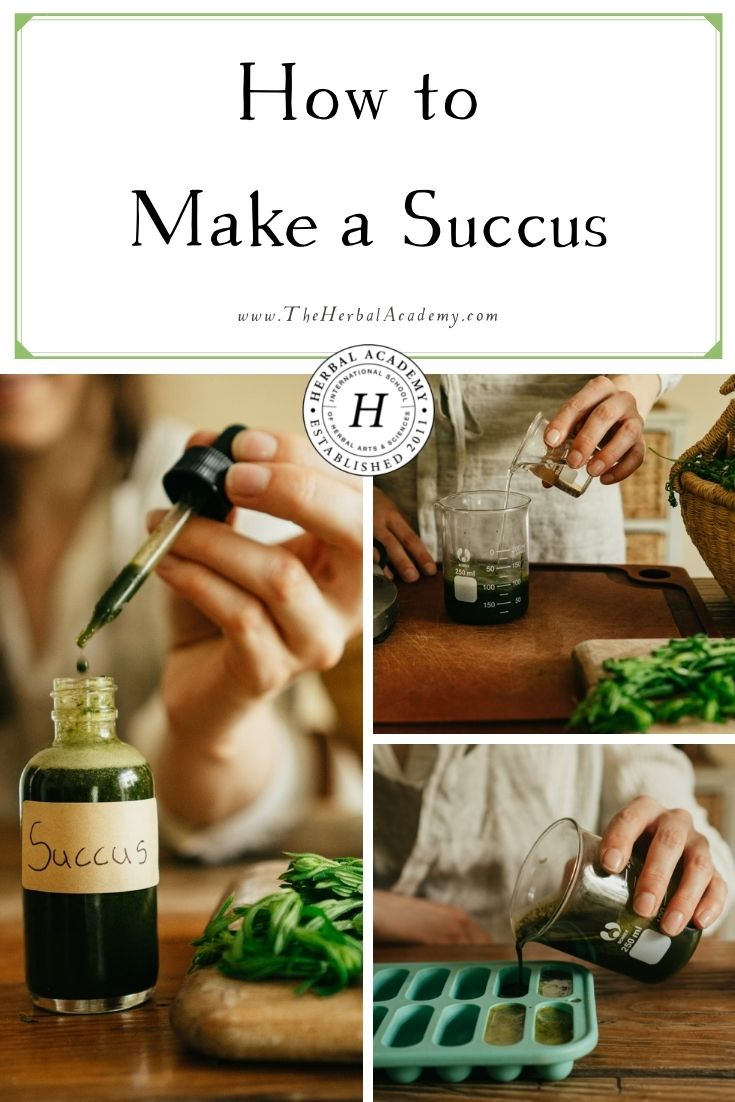 How to Make a Succus   Herbal Academy   Learn how to make a succus as a useful solution for preserving the freshly-expressed juice of a plant into a manageable storage supply.