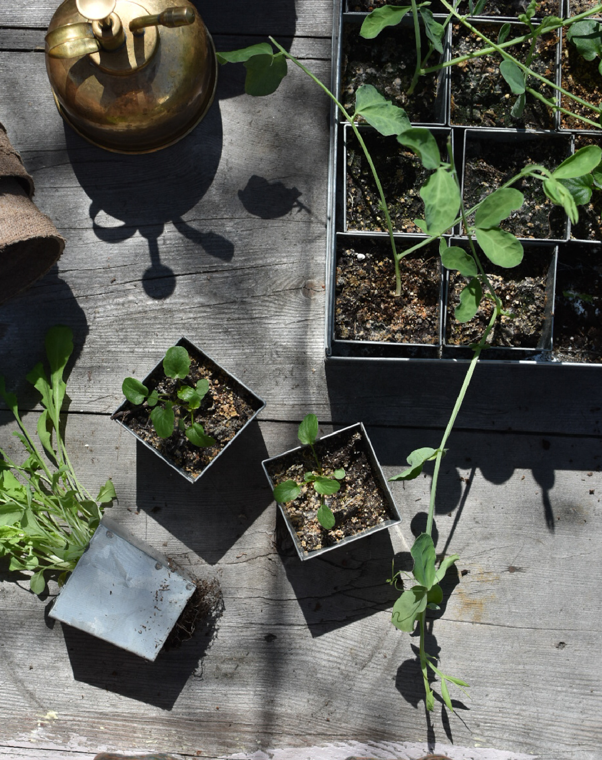 various plants in seed trays