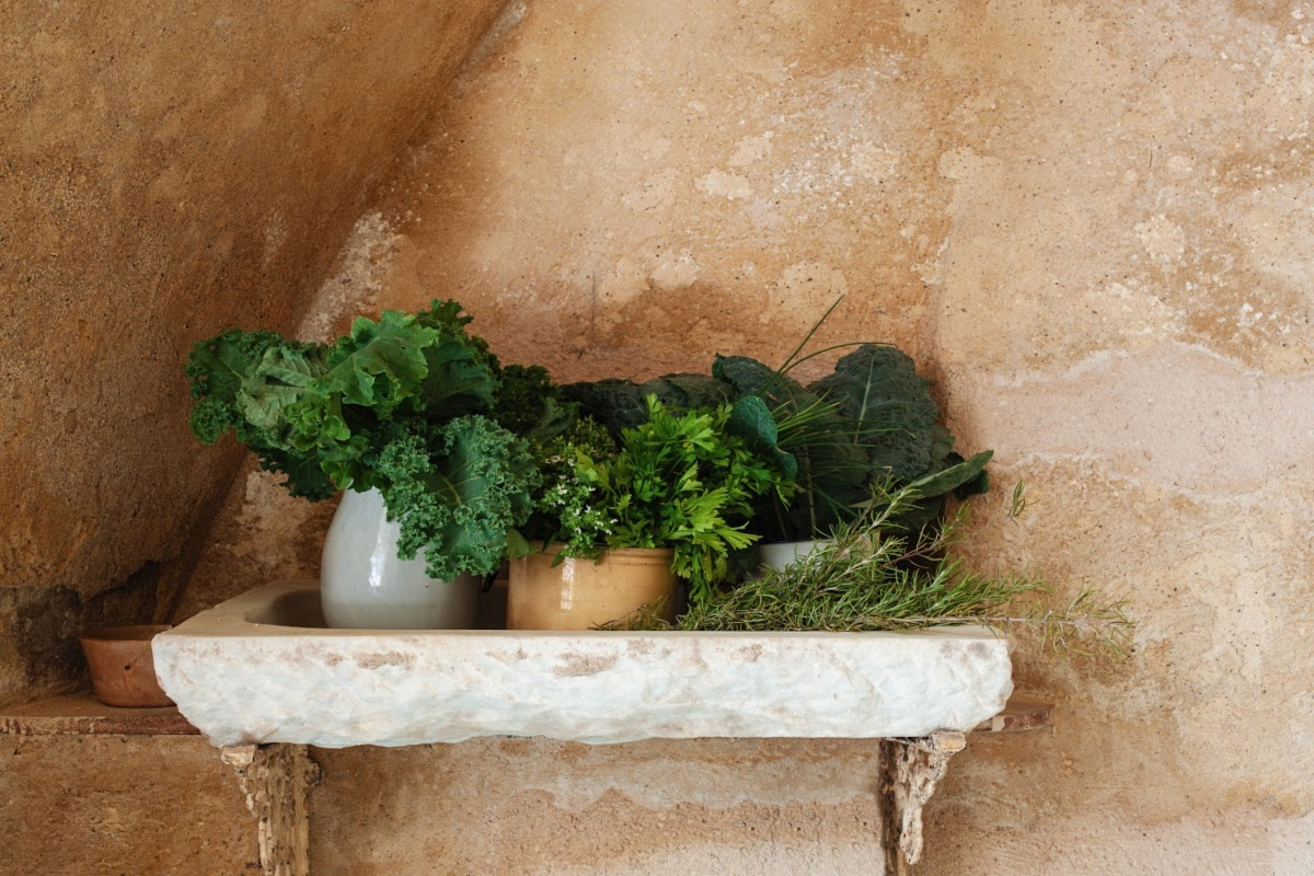wild greens growing in pots