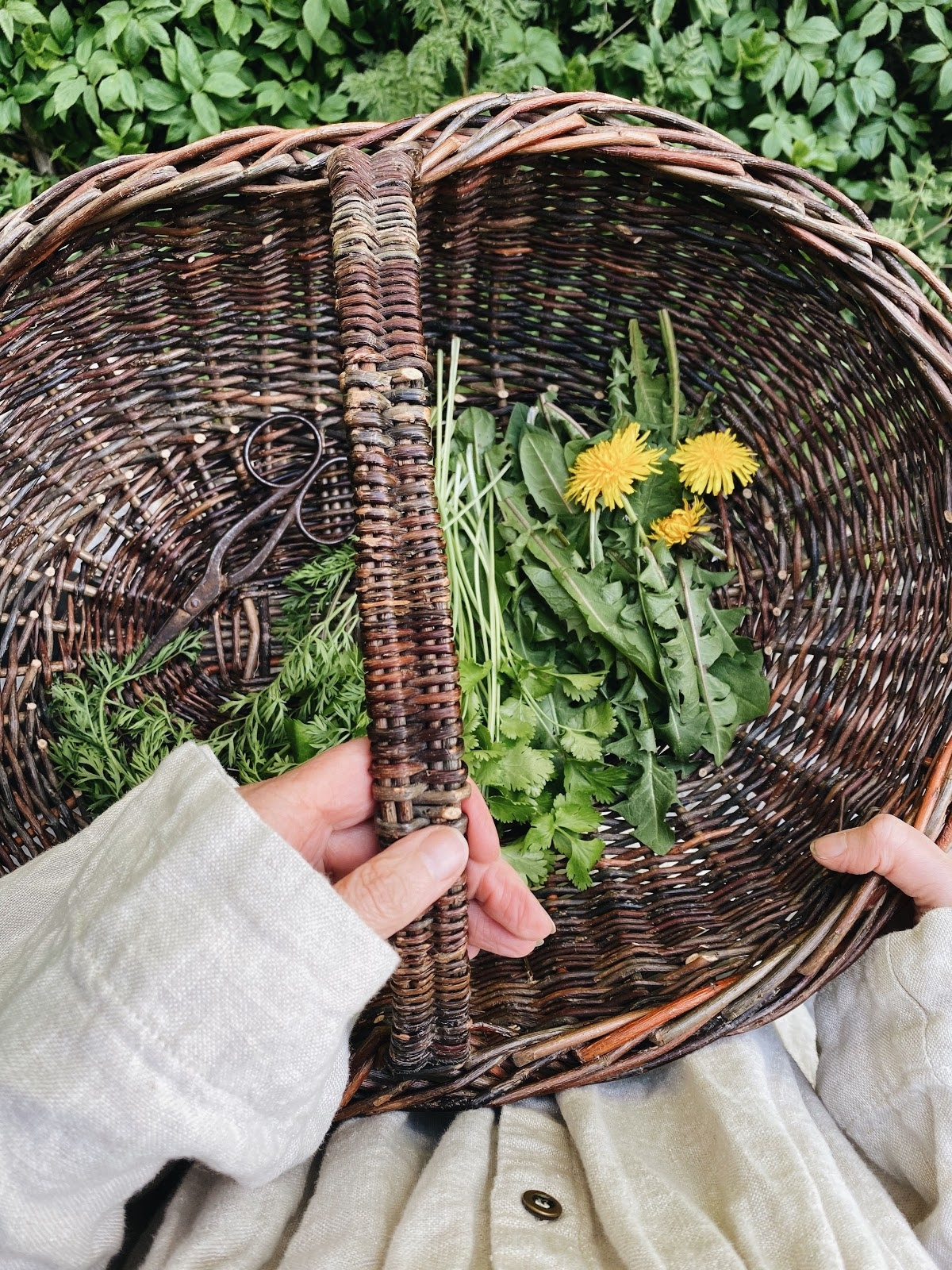 wild green in a basket