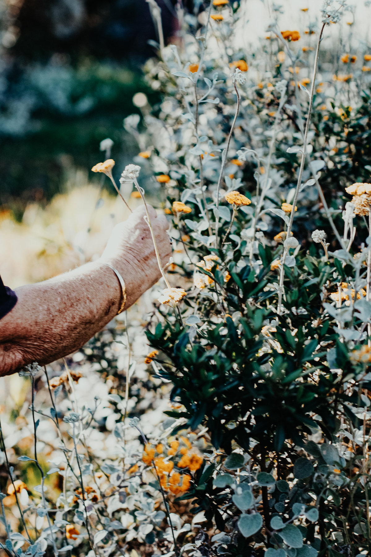Healthy Aging with Herbalism - Advanced Herbal Course