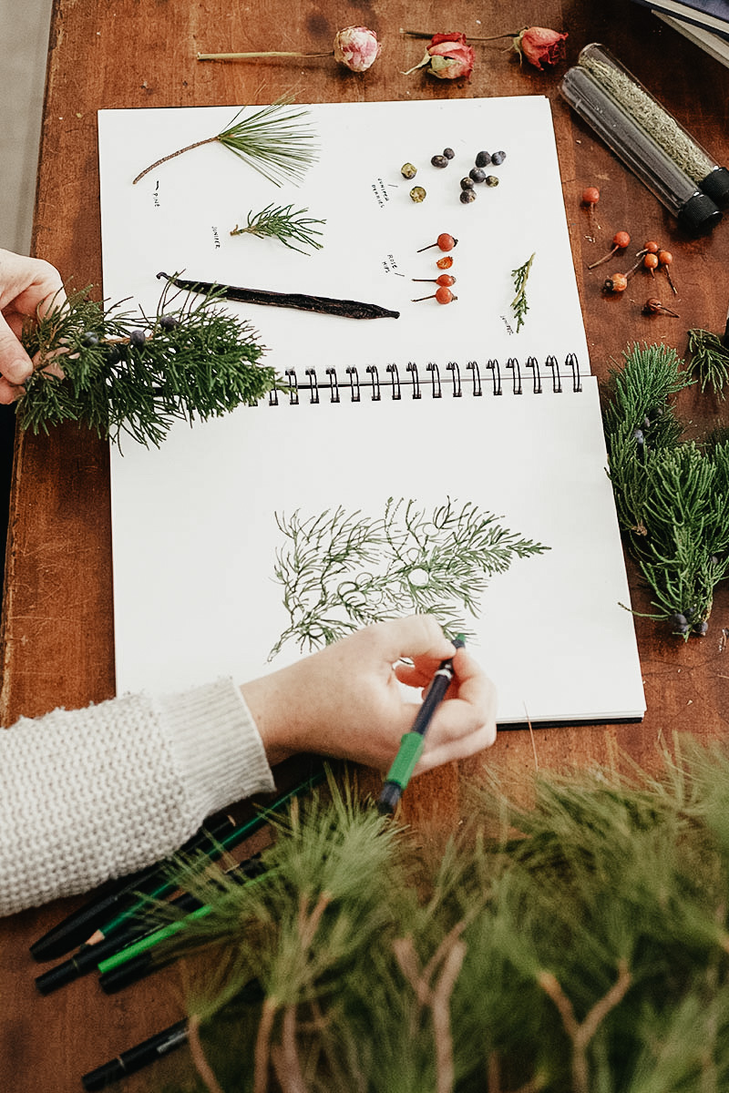 Botany and Wildcrafting Course – how to illustrate plant parts