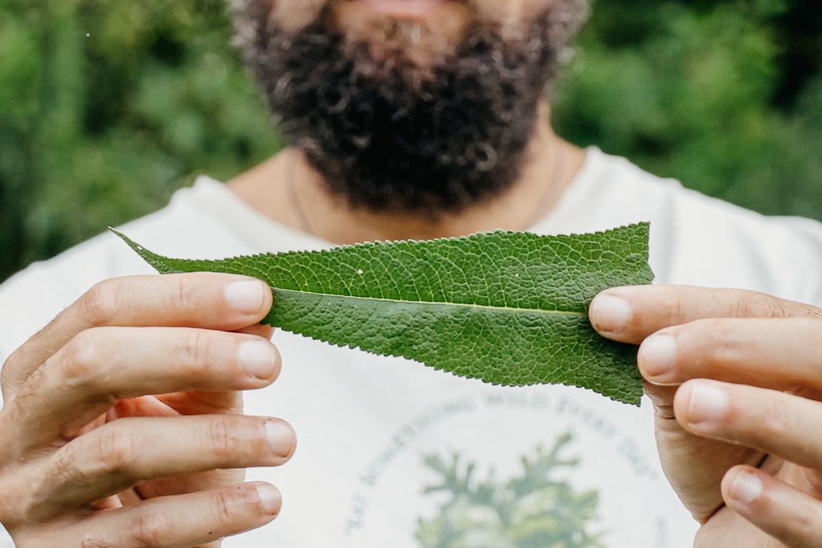 Botany & Wildcrafting Course –Herbal Academy Marc Williams