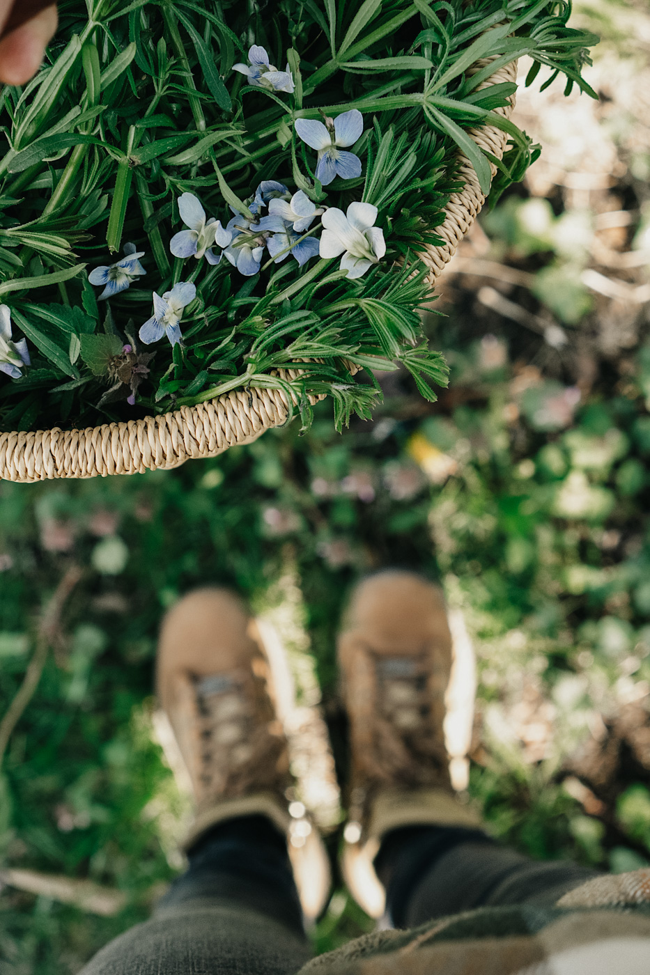 Herbal Academy's The Foraging Course – Learn how to wildcraft safely