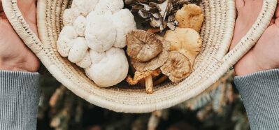 Herbal Academy's The Mushroom Course