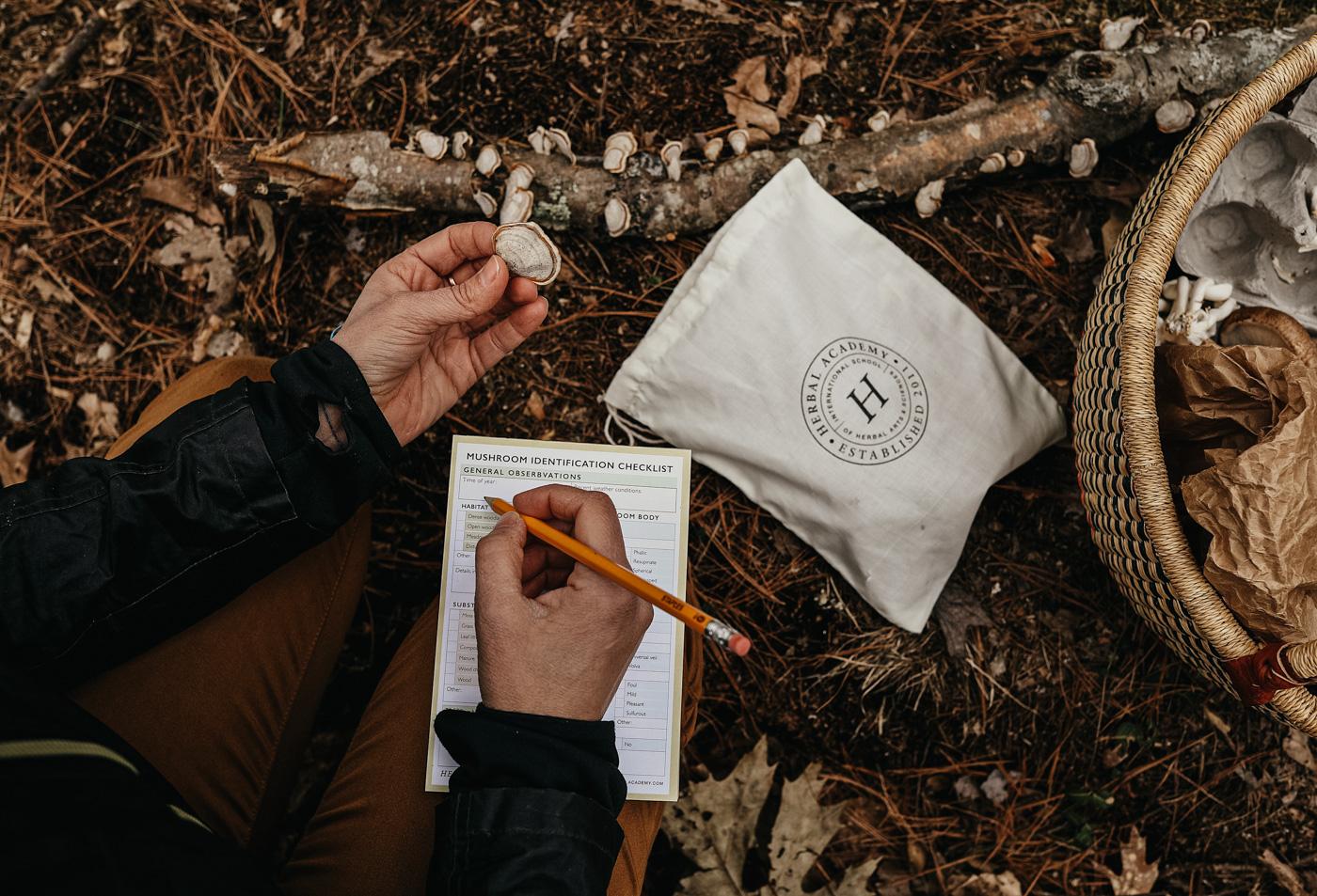 THE Mushroom Course by Herbal Academy - mushroom identification