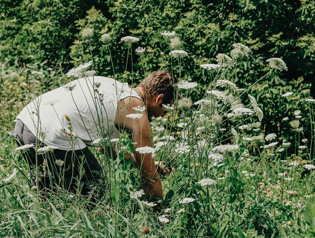 Wildcrafting - herbalism