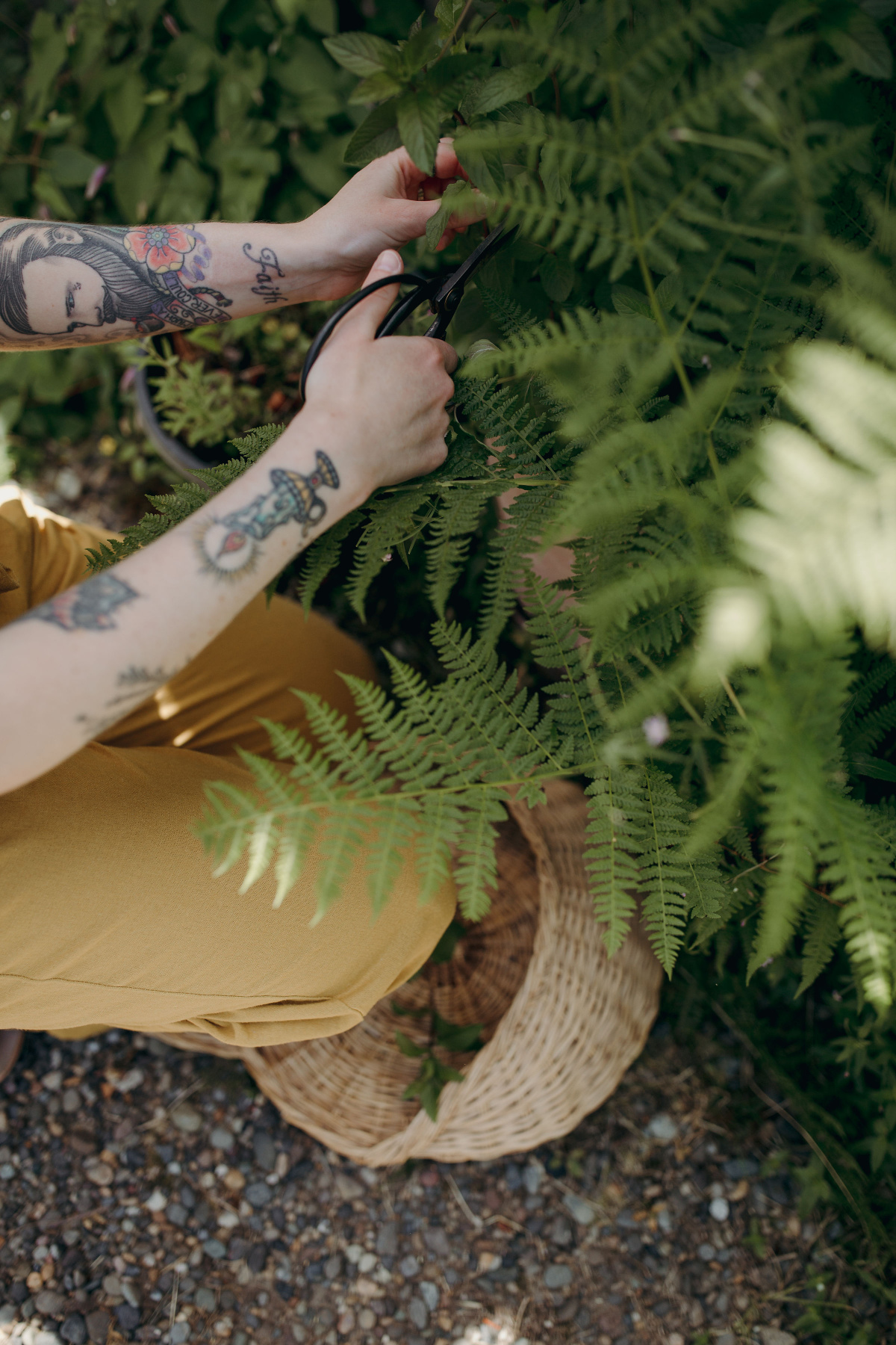 foraging herbs with scissors