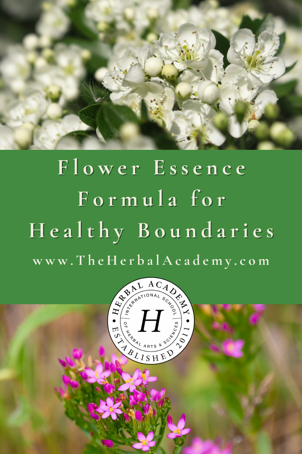 Flower Essence Formula for Healthy Boundaries | Herbal Academy | Since boundaries are often perceived and felt energetically, flower essences are an herbal tool for healthy boundaries from the inside out.