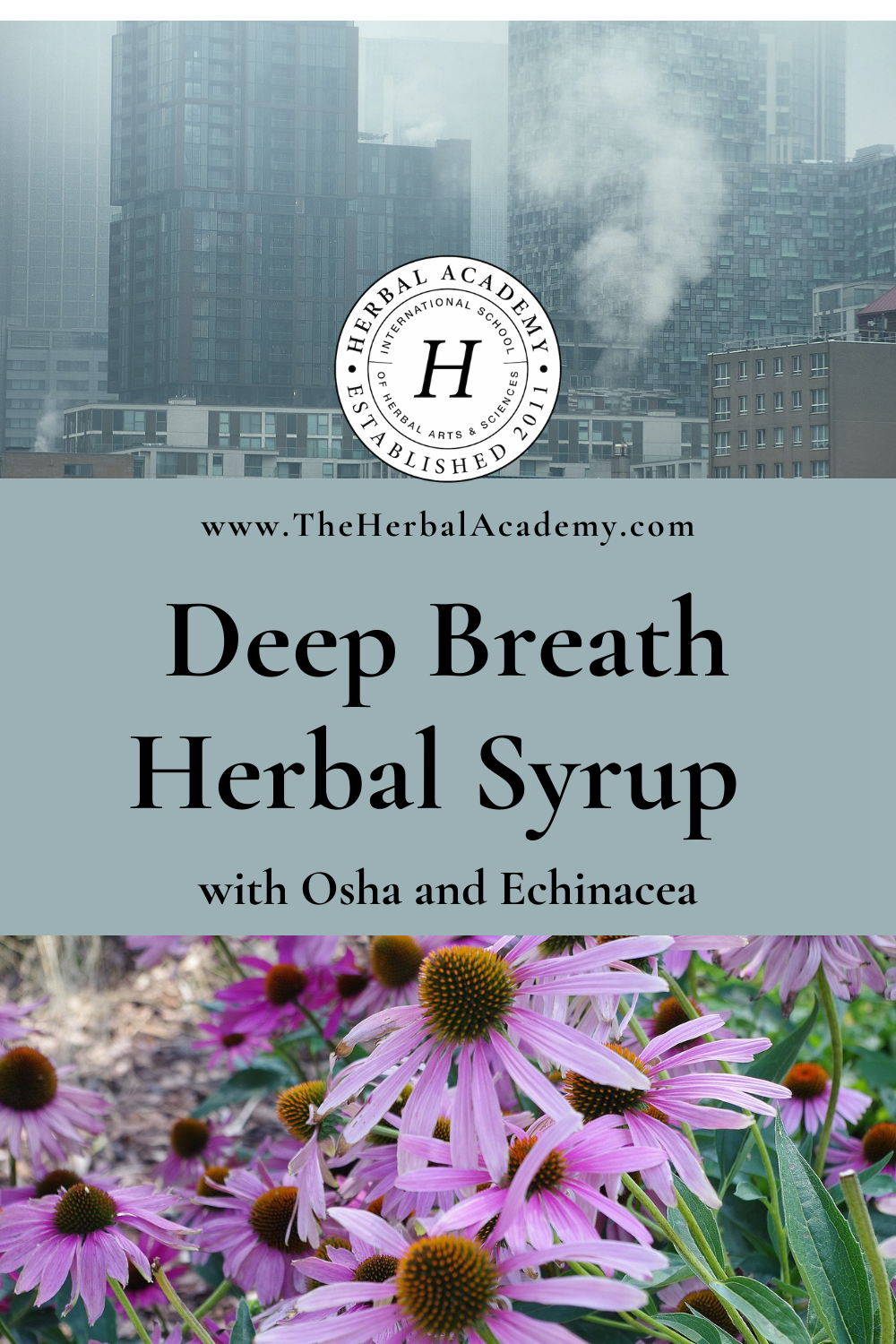 Deep Breath Herbal Osha and Echinacea Syrup Recipe | Herbal Academy | This herbal osha and echinacea syrup recipe is an effective at home and on-the-go support for the lungs and a daily immune-booster.