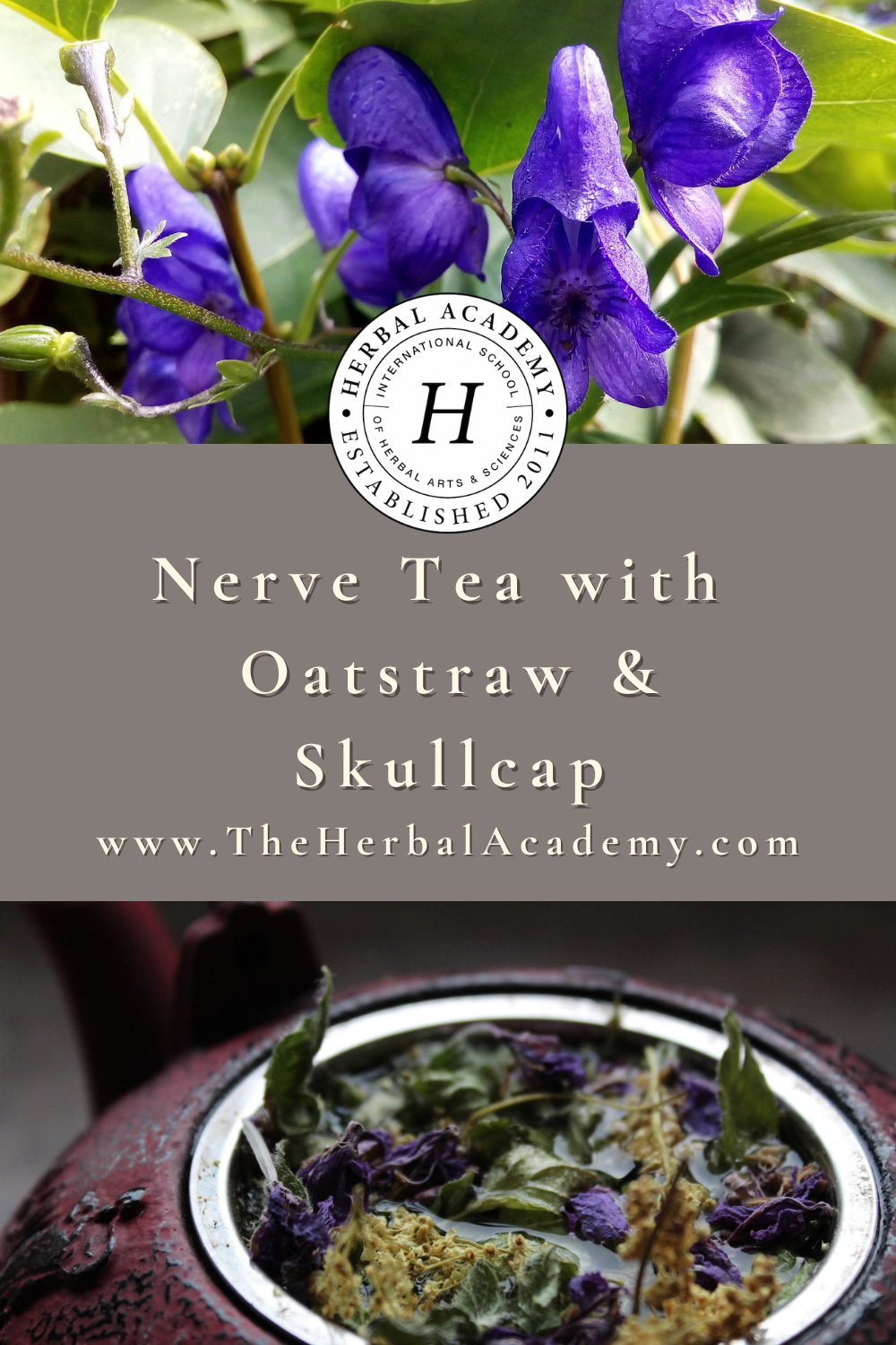 Nerve Tea with Oatstraw and Skullcap | Herbal Academy | Integrating this nerve tea recipe can help nourish a frayed nervous system while soothing the effects of constant nervous system stimulus.