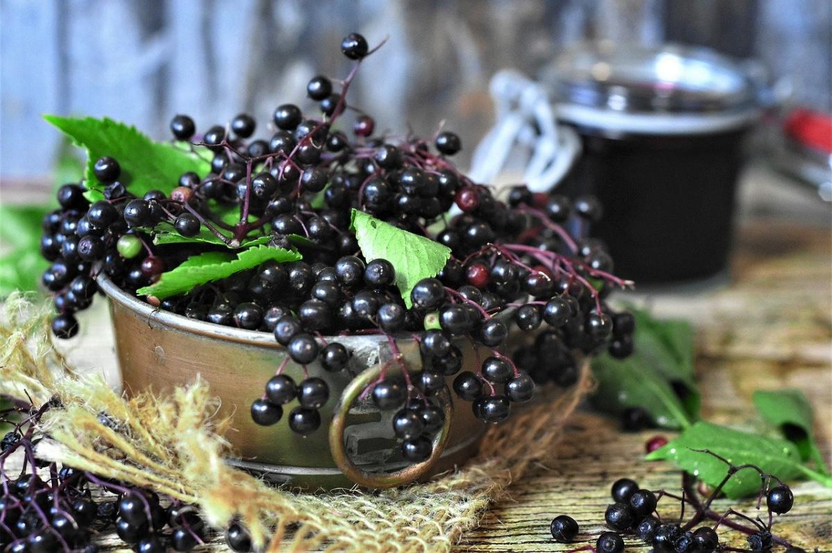 fresh elderberries in a bowl