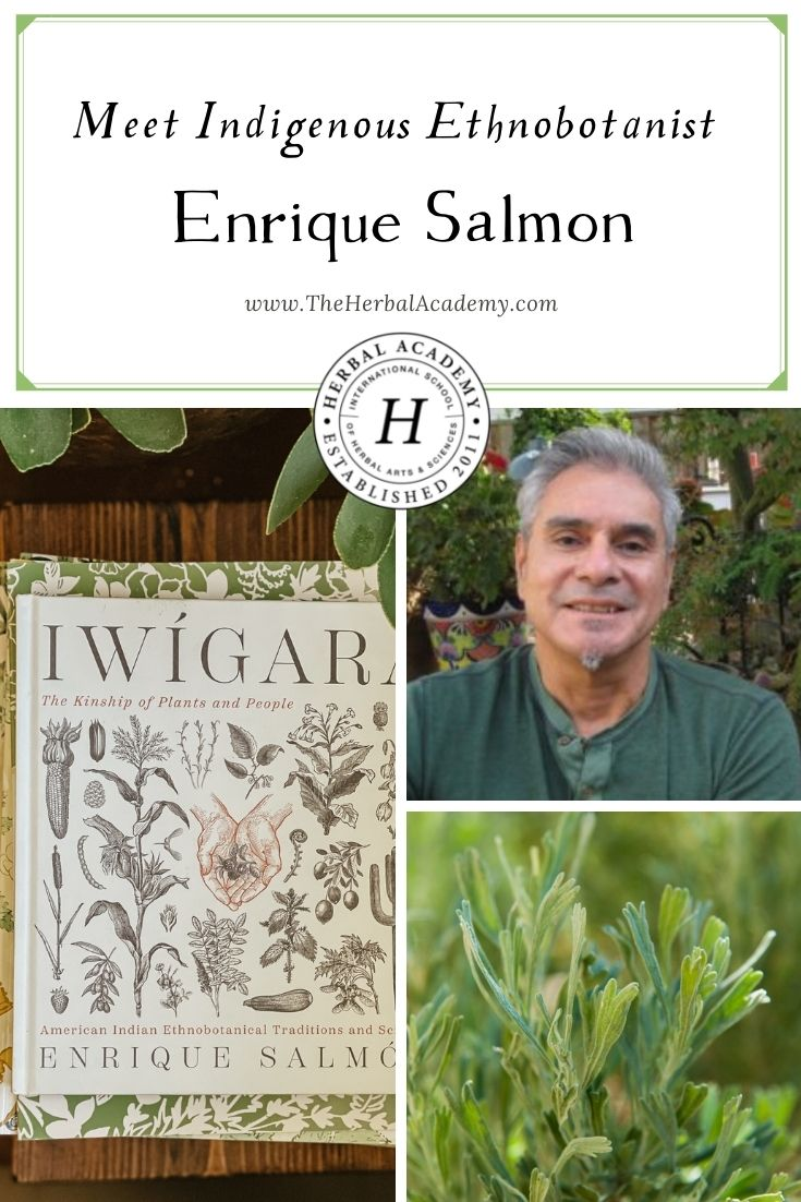 Meet Indigenous Ethnobotanist Enrique Salmón | Herbal Academy | The following book excerpt shares the uses and health benefits of sagebrush and is taken from the book, Iwigara, by herbalist Enrique Salmón.
