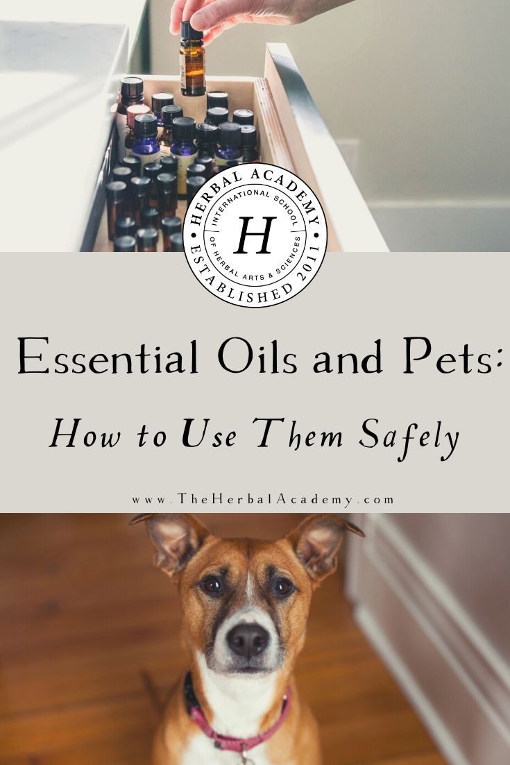 Essential Oils and Pets: How to Use Them Safely | Herbal Academy | If you've wondered about essential oils and pets, you can use them safely if you follow some relatively simple guidelines.
